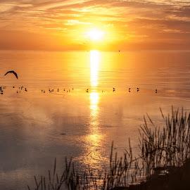 Sunset! by Sidney Portier - Landscapes Sunsets & Sunrises ( sunset, zonsondergang )