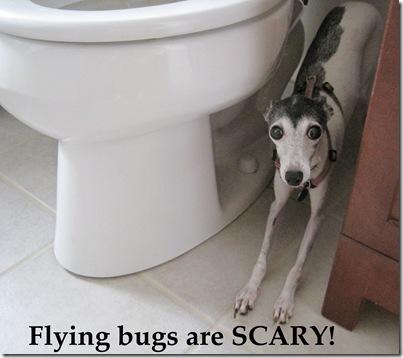 scared elle