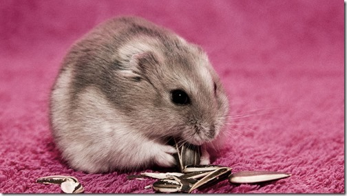 hamster grande imagen (2)