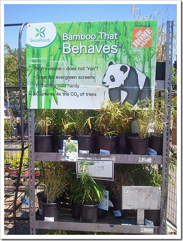 Succulents And More Clumping Bamboo At Home Depot But
