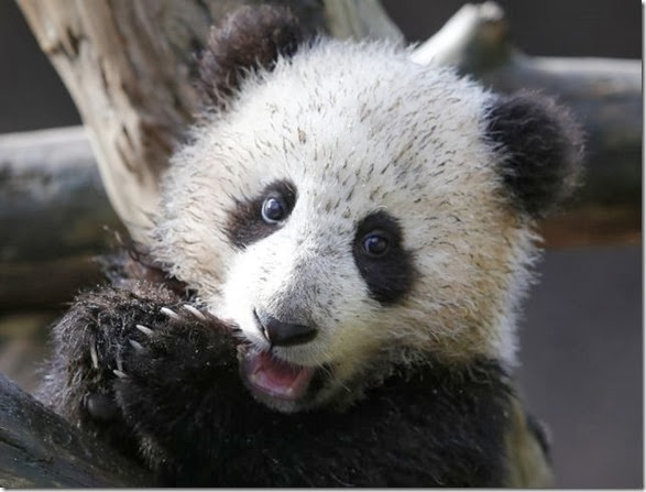 cute-baby-animals-38