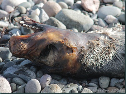 19-dead-seal