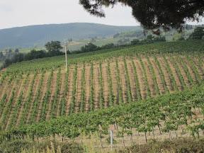 Travel to San Gimignano