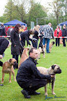 20100513-Bullmastiff-Clubmatch_30879.jpg