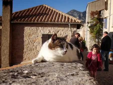 28, Pisica Coasta de Azur.JPG