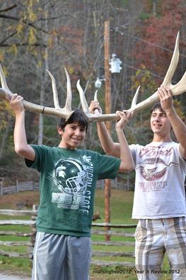 Bull elk in Maggie Valley, NC