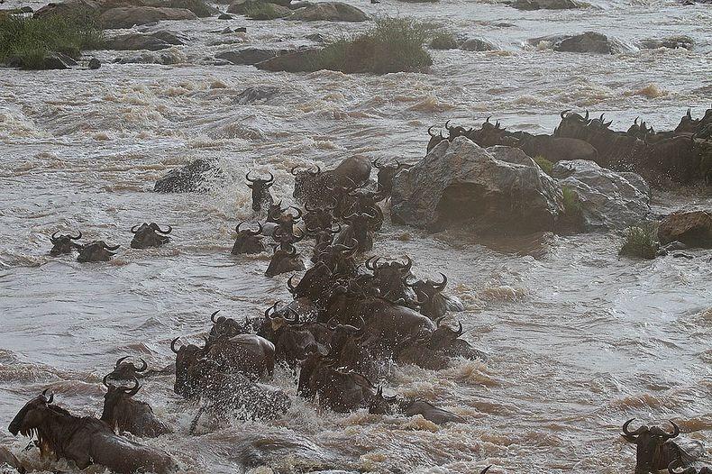 mara-river-crossing-7