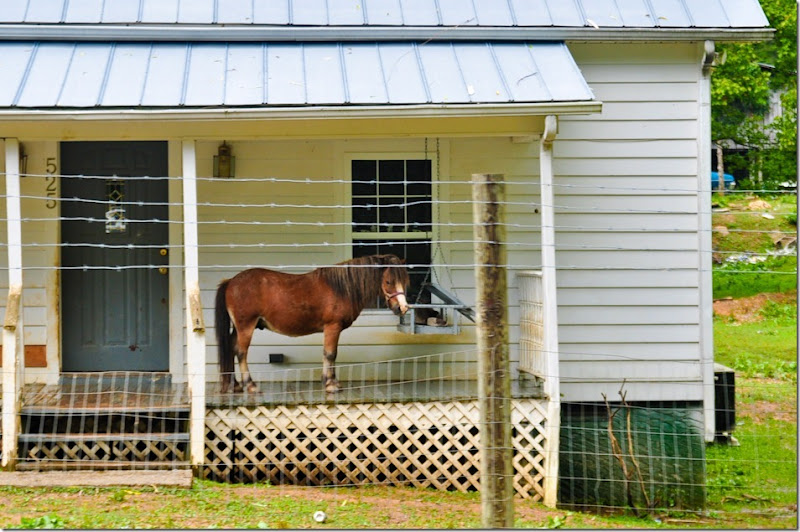 horse on porch-9088
