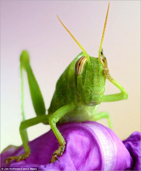 A grasshopper appears to scratch its head while deep in thought