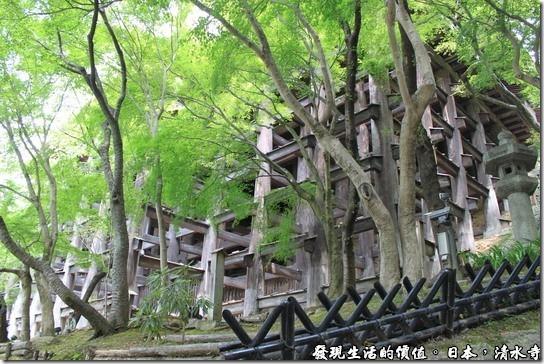 日本京都府-清水寺,這些木頭就是支撐住整個清水四大舞台的梁柱,三百多年前的日本當然沒有釘子可用,所以全部300多跟的梁柱,都是靠著卡榫定位支撐著。