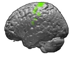 motor cortex fMRI