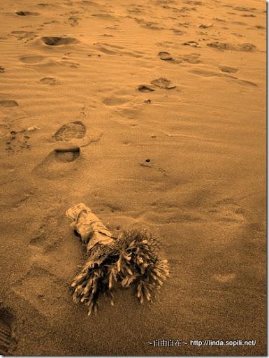 沙崙海水浴場-遺棄的捧花