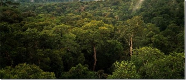 beautiful-amazon-rain-forest-6