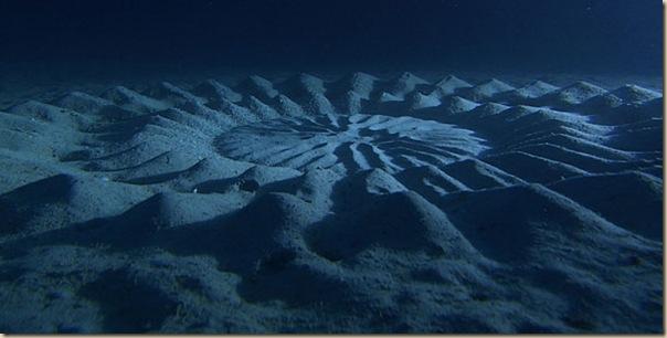Crop Circles sous-marins (6)