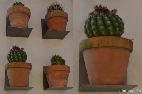 collage piante grasse (800x512)