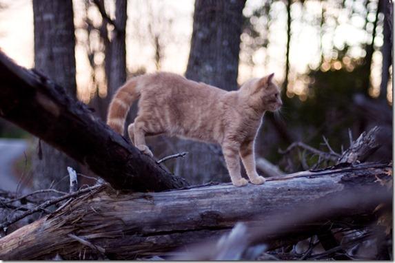 cat12-170