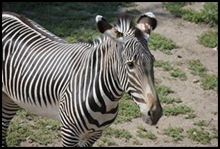Zoo5 038