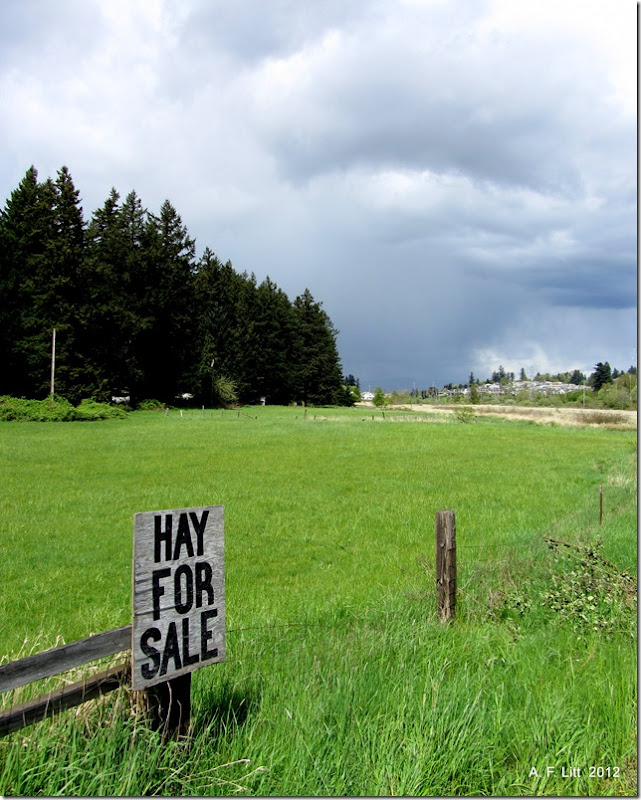 Hay For Sale.  Gresham, Oregon.  April 26, 2012.  Photo of the Day by A. F. Litt: June 2, 2012.