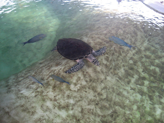 Sea turtle exhibit