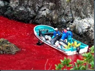 massacre-de-golfinhos