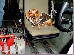 Amos-pilot