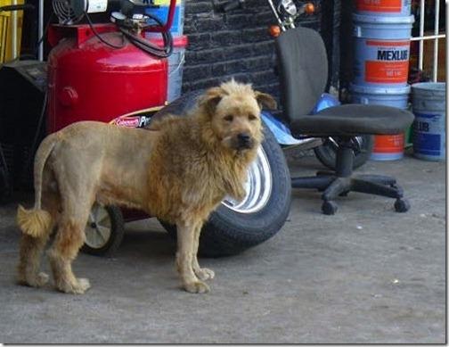 awesome-animal-haircuts4