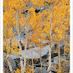 AspensOrangeBouldersBishopCreek20101003.jpg