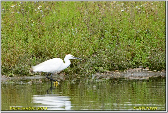 RSPB Middleton Lakes