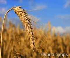 Hybrid Crops
