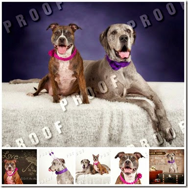 pet photo shoot collage