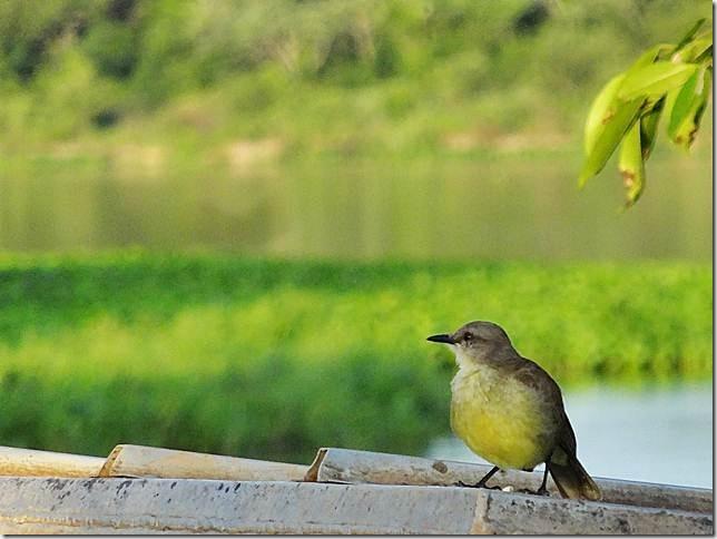 Pantanal_DSC08541