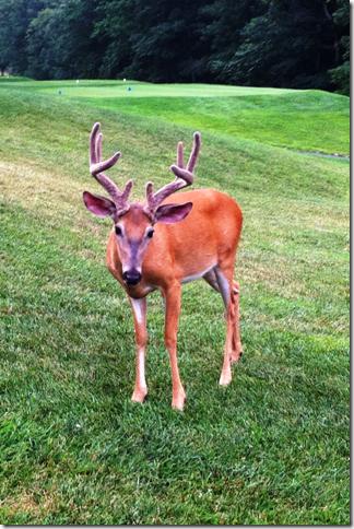 Deer 02
