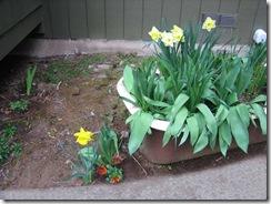 planting-flowers-1204-5