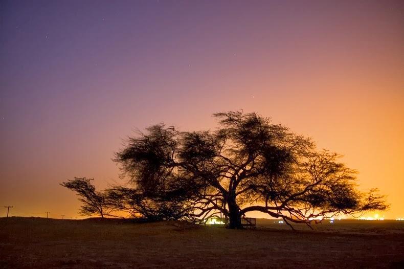 tree-of-life-5