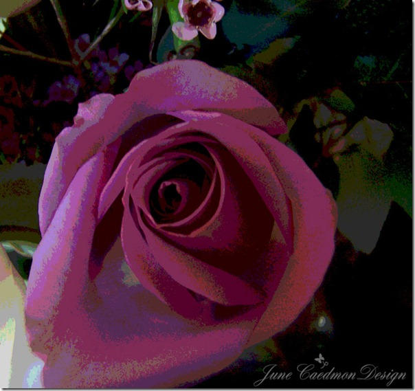 LavenderRose_Posterized