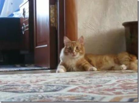 cat_rosia_walk