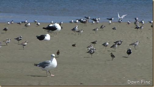 Birding Clamming_005