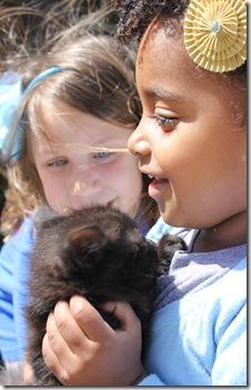 kitties 618