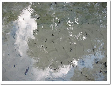 2012-12-2 Ocala (5)