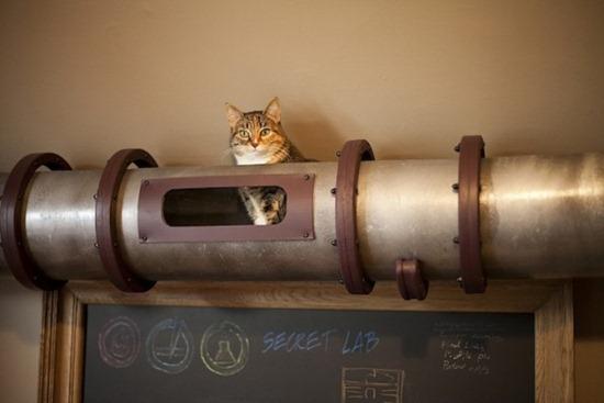 Trânsito de gatos 02