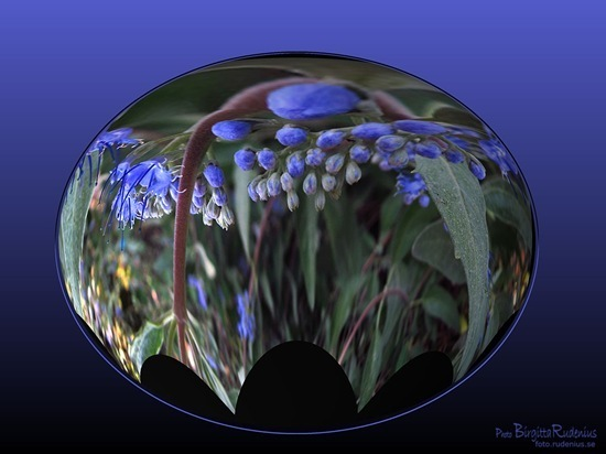 pm_20110831_blue2_thumb
