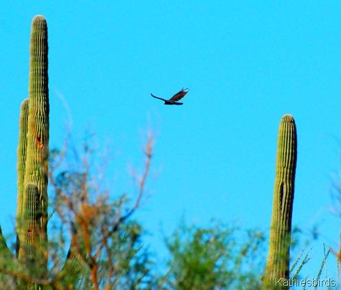 7. Saguaro NP-kab
