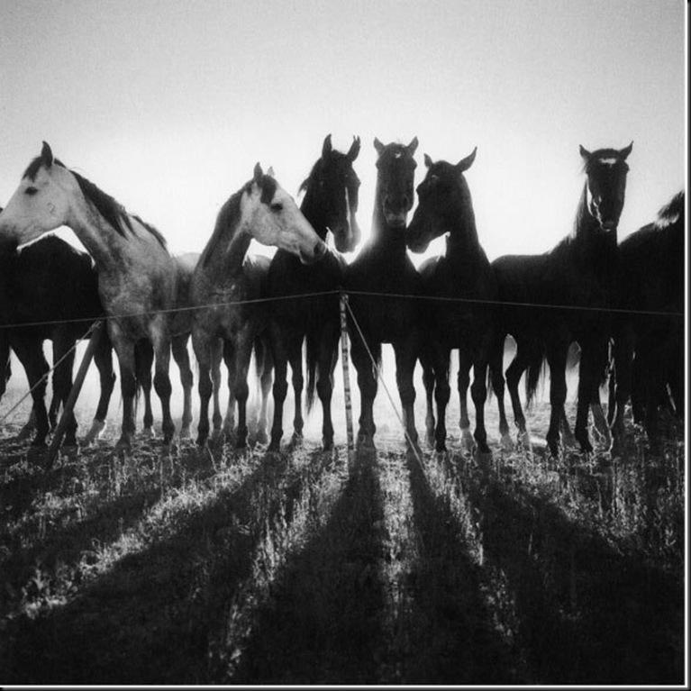13-horse-shadows