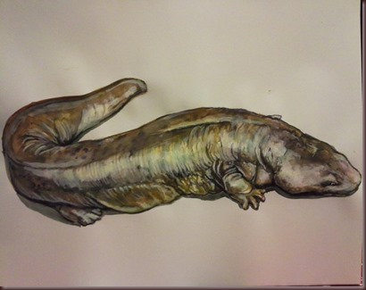 Amazing Animals Pictures Chinese Giant Salamander (11)