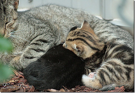 Kittens_Flowerbed