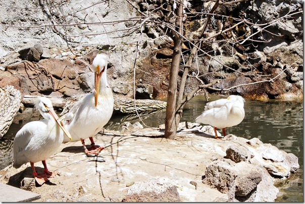 124 tautphaus park zoo