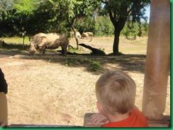 Mj rhino