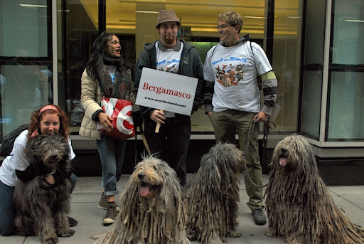 Just look at these Bergamasco - an ancient shepherding breed that kind of look like big floor mops!