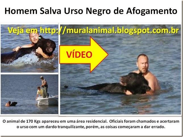 Homem Salva Urso Negro de Afogamento