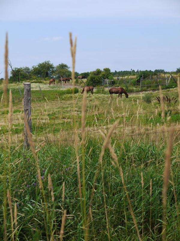 meadow_4
